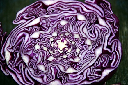 Red Cabbage, designs by the color purple