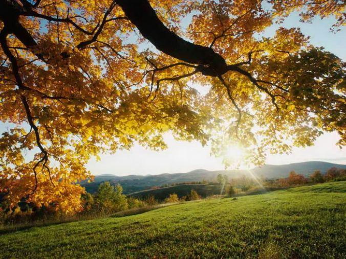 Good Morning Sunshine the world says hello!