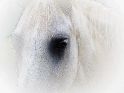 whitehorse...by greyer baby