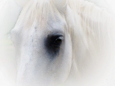 whitehorse...by greyer baby
