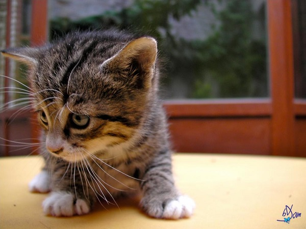 chats_et_mulots-31