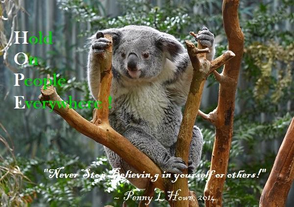 Koala - Copy