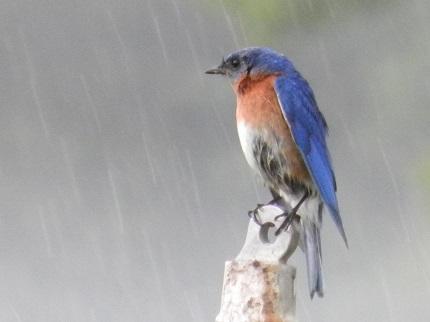 rainydayblues