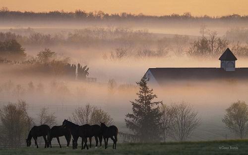 foggy_horsefarm