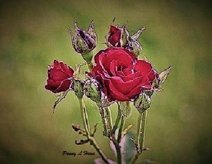 rosestw